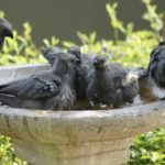 Keep your Bird Bath clean