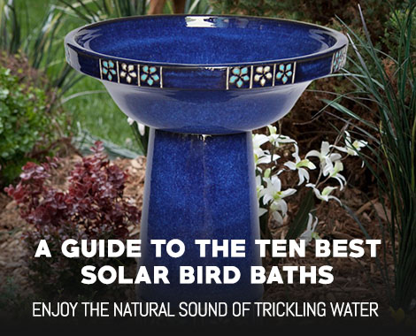 Best Solar Bird Baths