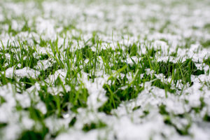 How Do I Protect My lawn In The Winter