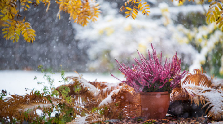 How Do You Keep Potted Plants Alive In The Winter