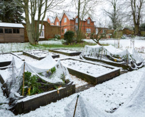 How Do You Prepare A Raised Bed For Winter