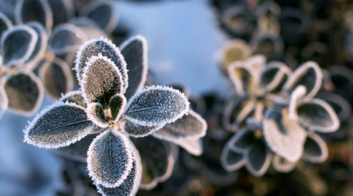 What Are Good Outdoor Winter Plants