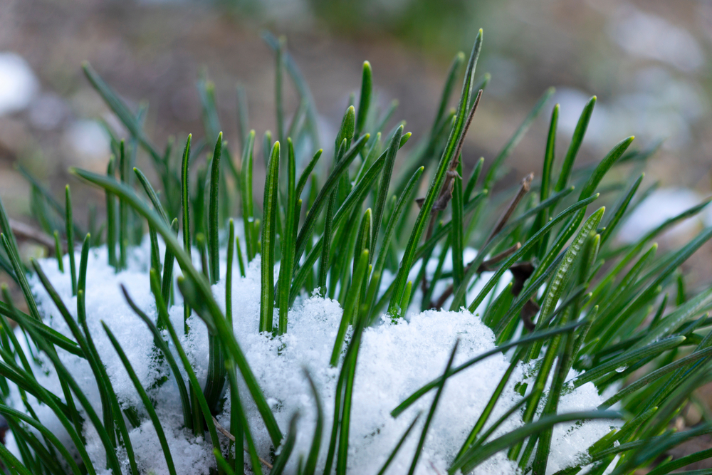 What Do You Do With Potting Soil In The Winter