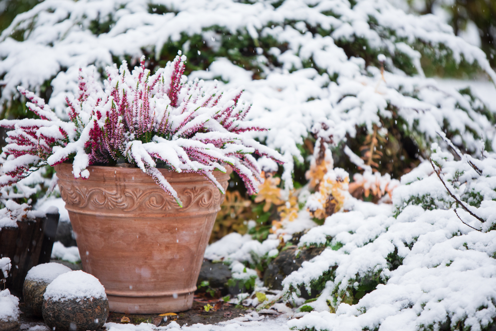 What Plants Can I Put In My Pots For Winter