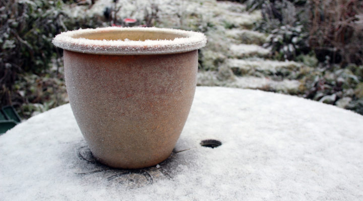 When's The Best Time To Plant A Winter Garden